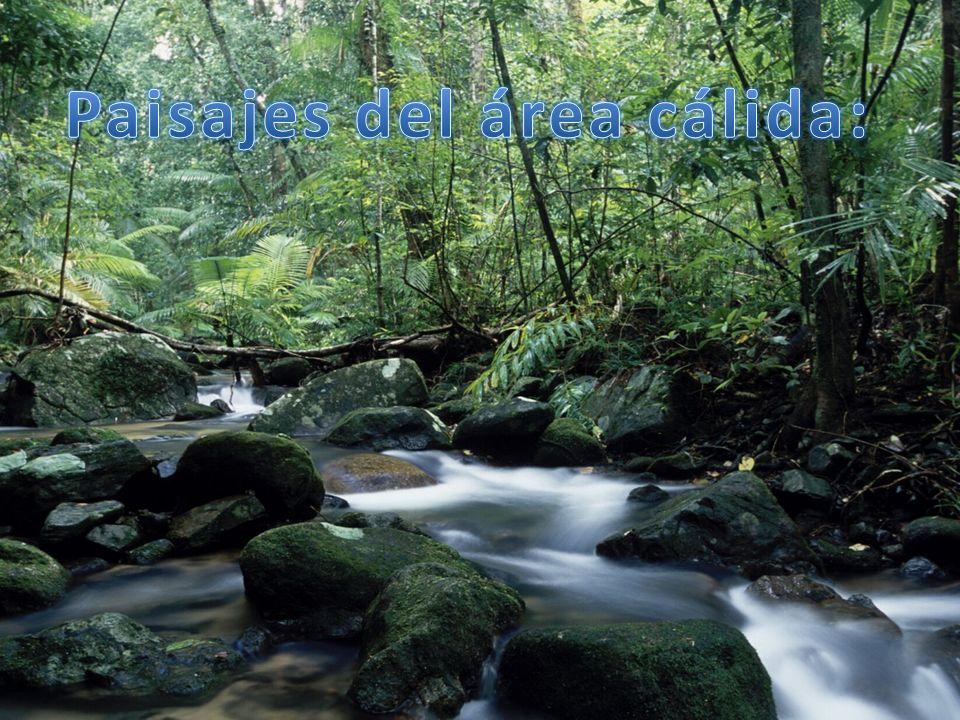 Temperatura: elevadas que superan los 22 ºC de media anual Precipitaciones: muy abundantes que superan los 2000 l/m2 Localización: en una banda al norte del ecuador Flora: selva ecuatorial Fauna: vistosas aves, insectos, anfibios y reptiles.