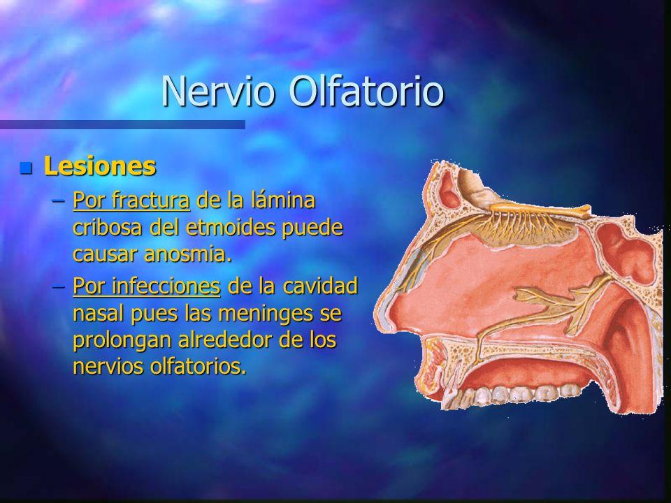n Lesiones –Por fractura de la lámina cribosa del etmoides puede causar anosmia. –Por infecciones de la cavidad nasal pues las meninges se prolongan a
