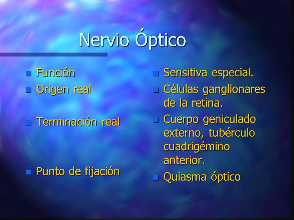 Nervio Óptico n Función n Origen real n Terminación real n Punto de fijación n Sensitiva especial. n Células ganglionares de la retina. n Cuerpo genic