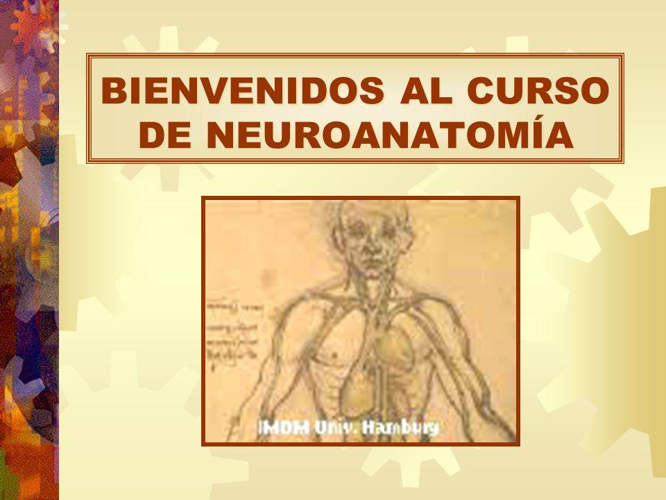 BIENVENIDOS AL CURSO DE NEUROANATOMÍA