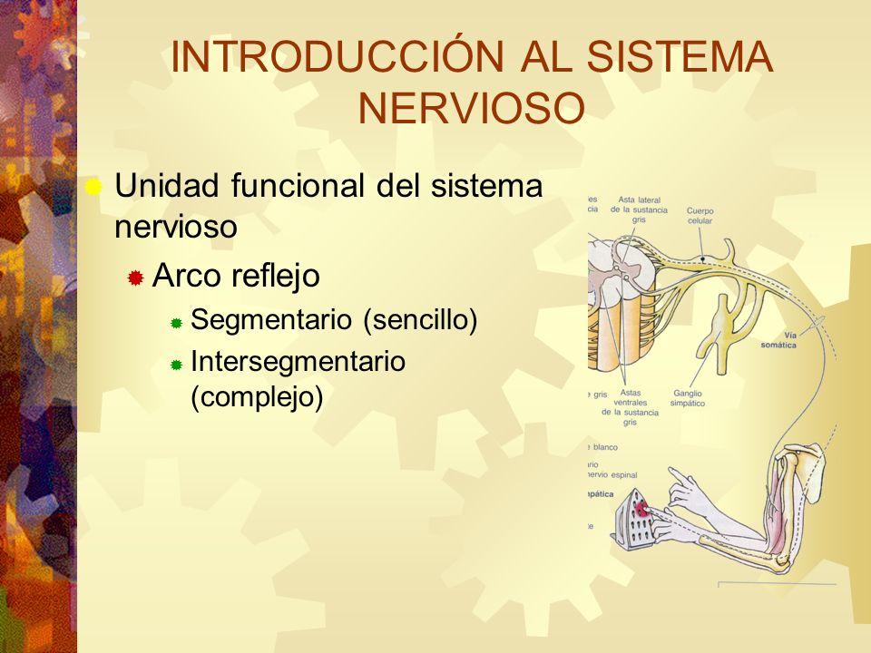 Unidad funcional del sistema nervioso Arco reflejo Segmentario (sencillo) Intersegmentario (complejo) INTRODUCCIÓN AL SISTEMA NERVIOSO