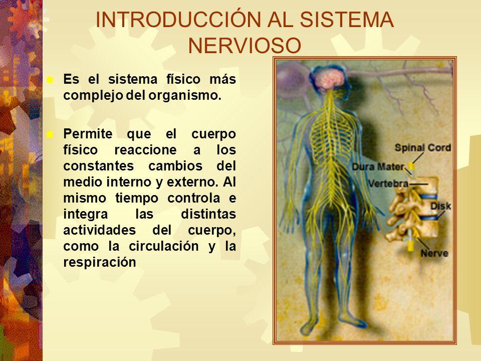 Divisiones Estructural: Sistema nervioso central (SNC) Sistema nervioso periférico (SNP) Funcional: Sistema nervioso somático(SNS) Sistema nervioso autónomo (SNA) INTRODUCCIÓN AL SISTEMA NERVIOSO