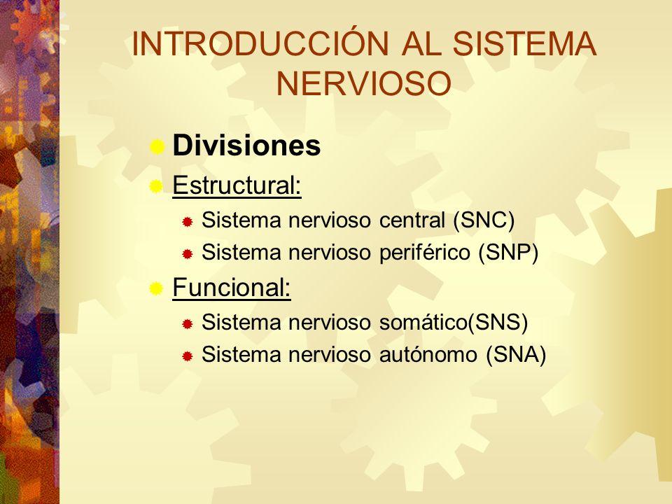 Divisiones Estructural: Sistema nervioso central (SNC) Sistema nervioso periférico (SNP) Funcional: Sistema nervioso somático(SNS) Sistema nervioso au