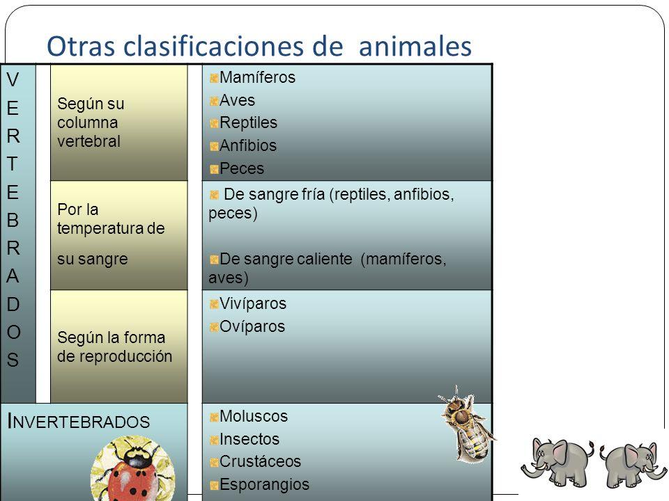 11 ANIMALESCLASESSUBCLASES 1 CLASIFICACIÓN DELOSANIMALESCLASIFICACIÓN DELOSANIMALES INVERTEBRADOSINVERTEBRADOS CELENTÉREOS GUSANOS ANÉLIDOS PLATELMINT