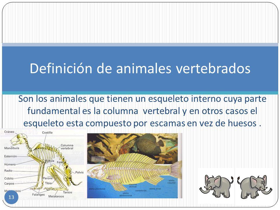 12 Otras clasificaciones de animales VERTEBRADOSVERTEBRADOS Según su columna vertebral Mamíferos Aves Reptiles Anfibios Peces Por la temperatura de su