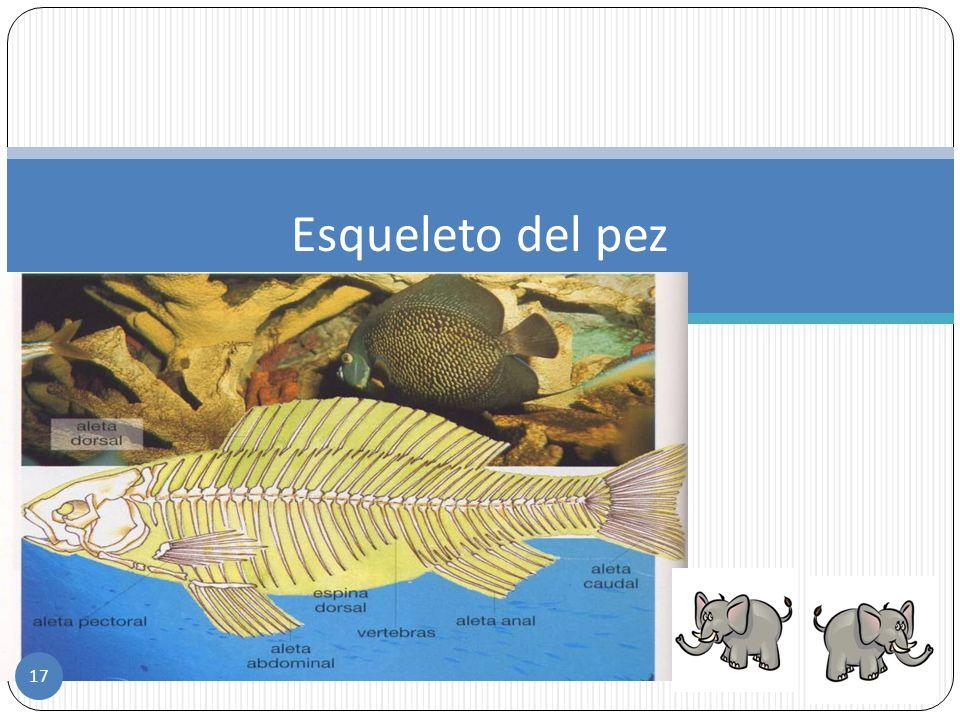 Ciclo de los peces Los peces son animales ovíparos, es decir, nacen de huevos. Respiran por medio de branquias que captan el oxígeno disuelto en el ag