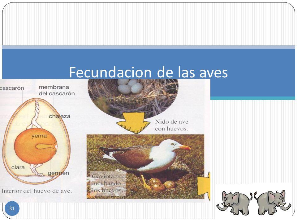 Reproducción de las aves Los huevos, para llegar a buen término, deben permanecer a una temperatura próxima a la del cuerpo del adulto. A este proceso