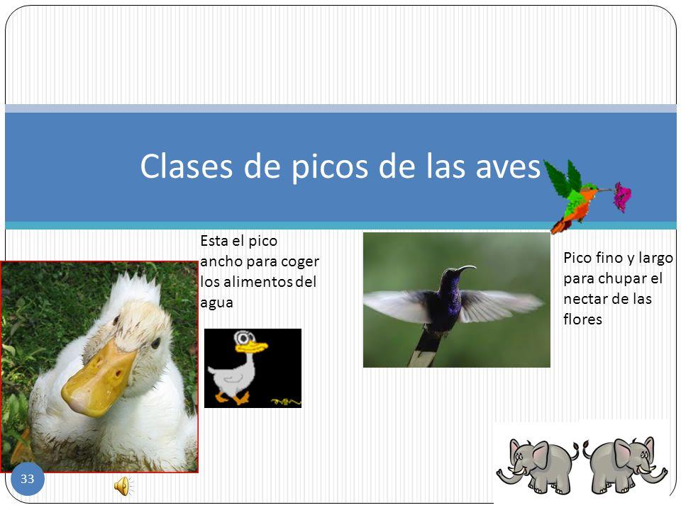 según su alimentación las aves pueden ser: Insectívoras- estas comen insectos Herbívoras- de alimentan principalmente de hierbas, frutos y semillas. C