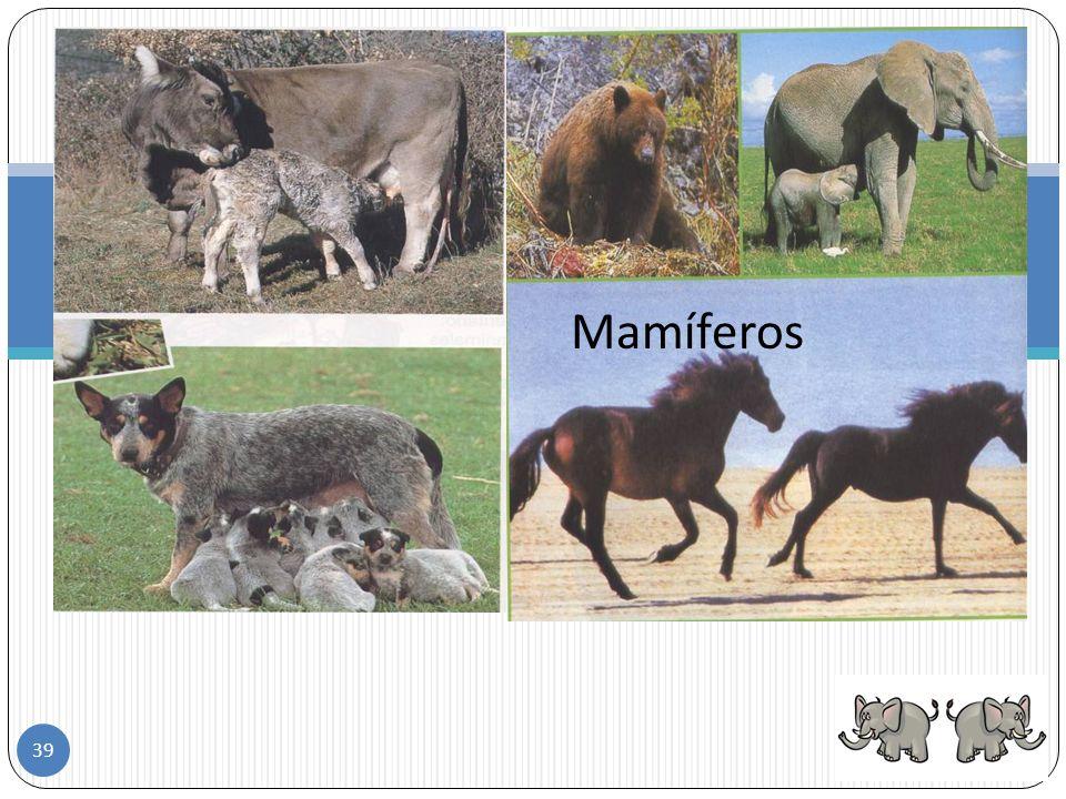 Mamíferos 38