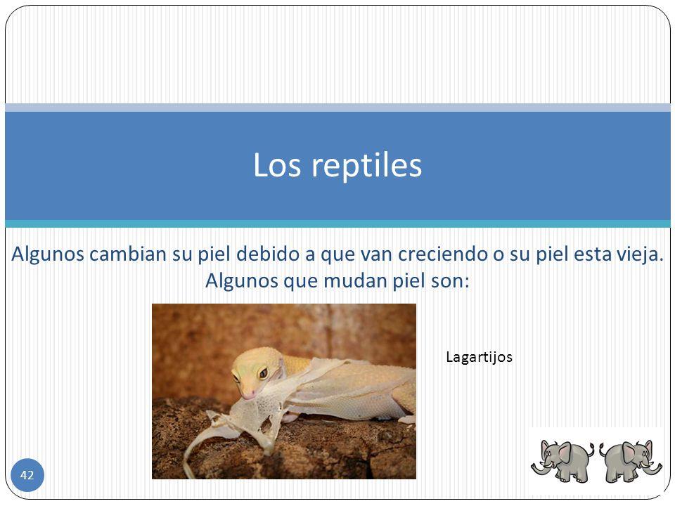 El cuerpo de los reptiles se divide en cabeza, tronco, extremidades y cola. Los reptiles se desplazan de manera diferente, la serpiente no tiene extre
