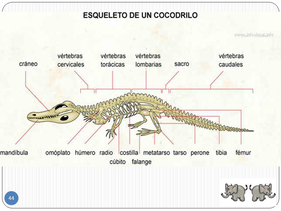 Los reptiles que mudan su piel culebras Lagartos 43