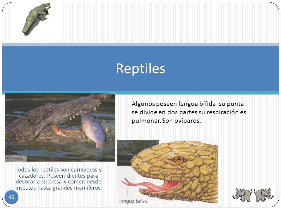 Reptiles Las tortugas nadan Las serpientes se arrastran Los lagartos andan 45