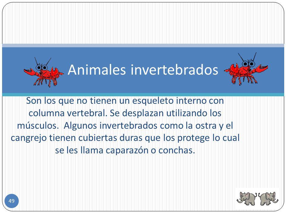 48 Invertebrados
