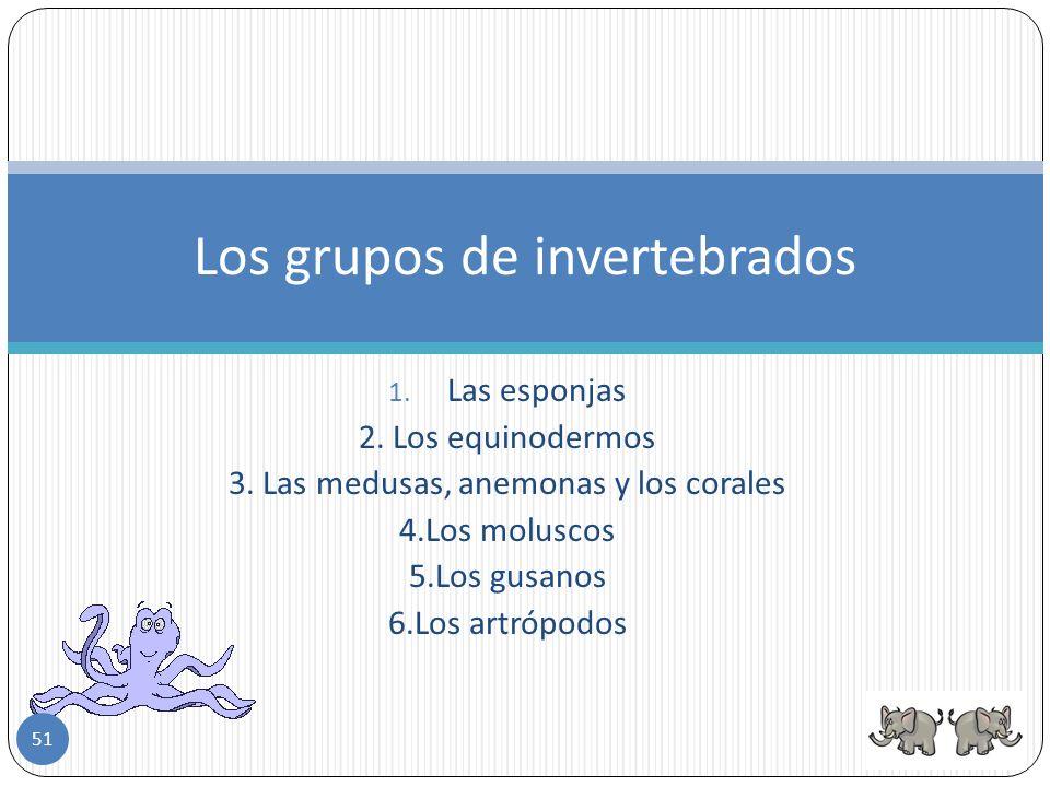 También están los invertebrados que no tienen cubiertas protectoras como la medusa y la lombriz de tierra. Todos los invertebrados son ovíparos,para r
