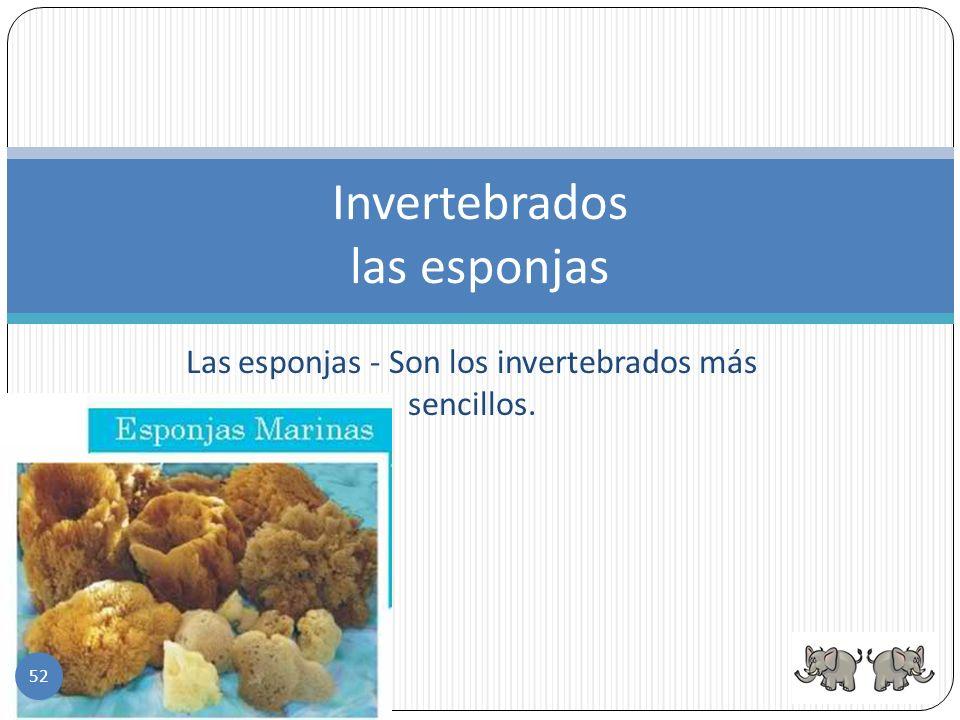 1. Las esponjas 2. Los equinodermos 3. Las medusas, anemonas y los corales 4.Los moluscos 5.Los gusanos 6.Los artrópodos Los grupos de invertebrados 5