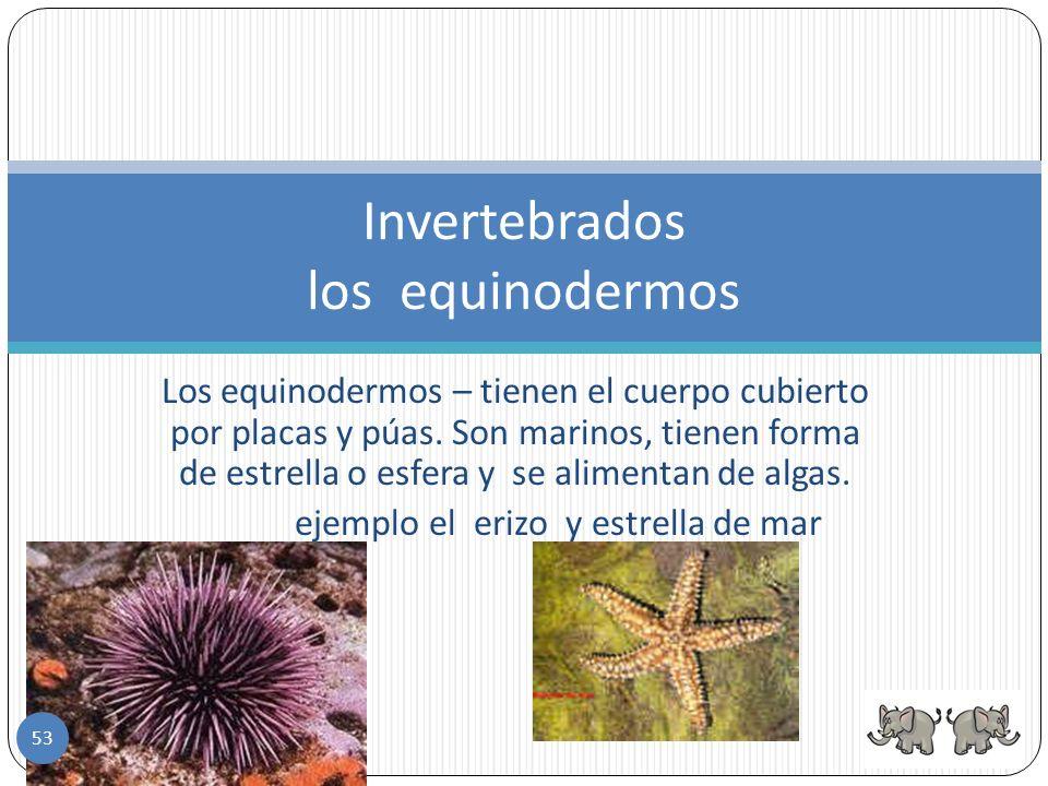 Las esponjas - Son los invertebrados más sencillos. Invertebrados las esponjas 52