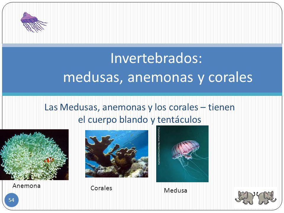 Los equinodermos – tienen el cuerpo cubierto por placas y púas. Son marinos, tienen forma de estrella o esfera y se alimentan de algas. ejemplo el eri