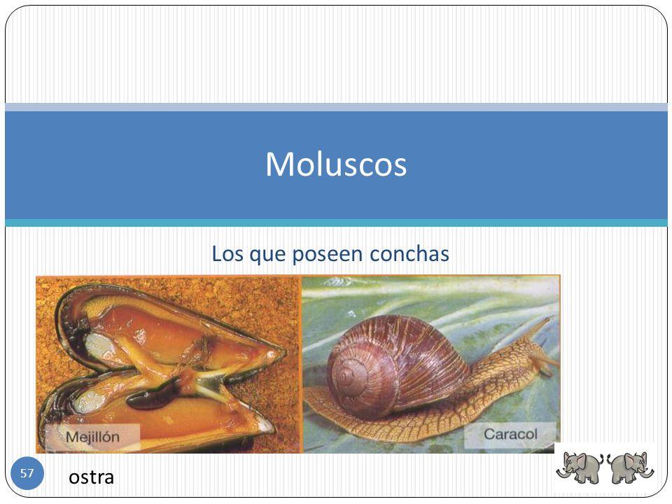 Los que no poseen conchas Moluscos Pulpo Lapas (babosa) 56
