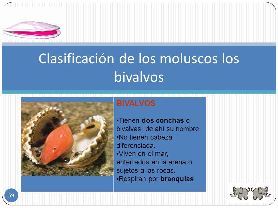 Clasificación de los moluscos gasterópodos GASTERÓPODOS Tienen sólo una concha. Los ojos los llevan en el extremo de unos tentáculos, que esconden en