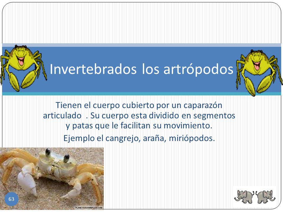 Clases de gusanos Anélidos (sanguijuela) Lombriz intestinal o parásito Lombriz de tierra 62