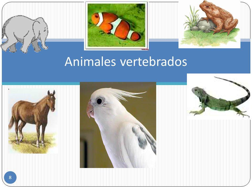 8 Animales vertebrados