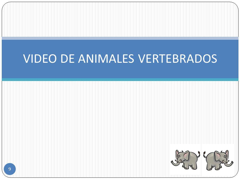 VIDEO DE ANIMALES VERTEBRADOS 9