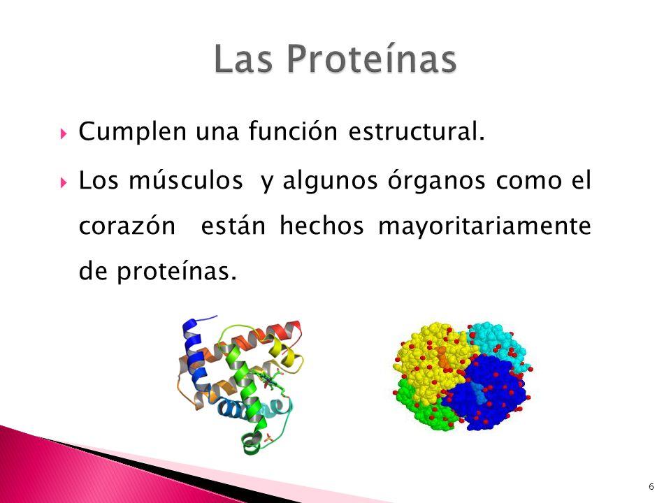 6 Cumplen una función estructural. Los músculos y algunos órganos como el corazón están hechos mayoritariamente de proteínas.