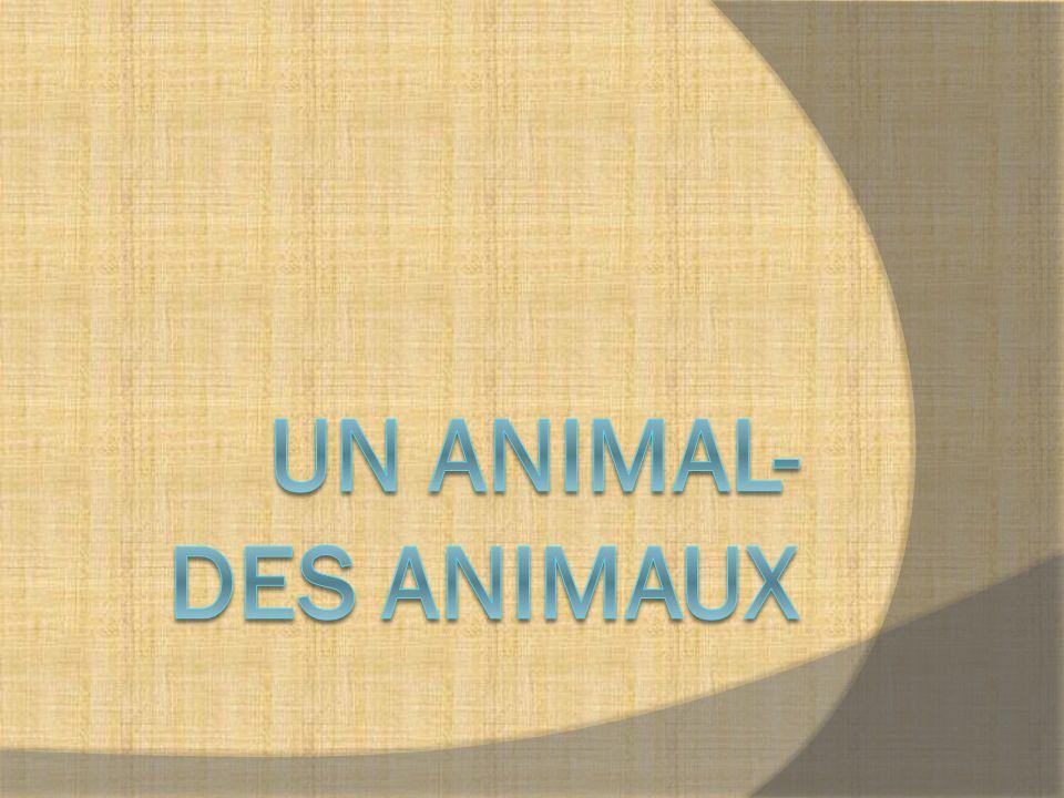 Animales domésticos Ce sont des animaux qui vivent avec les gens.
