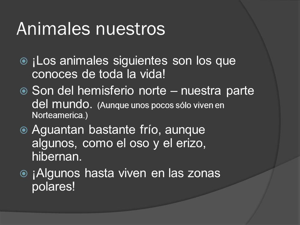 Animales nuestros ¡Los animales siguientes son los que conoces de toda la vida.
