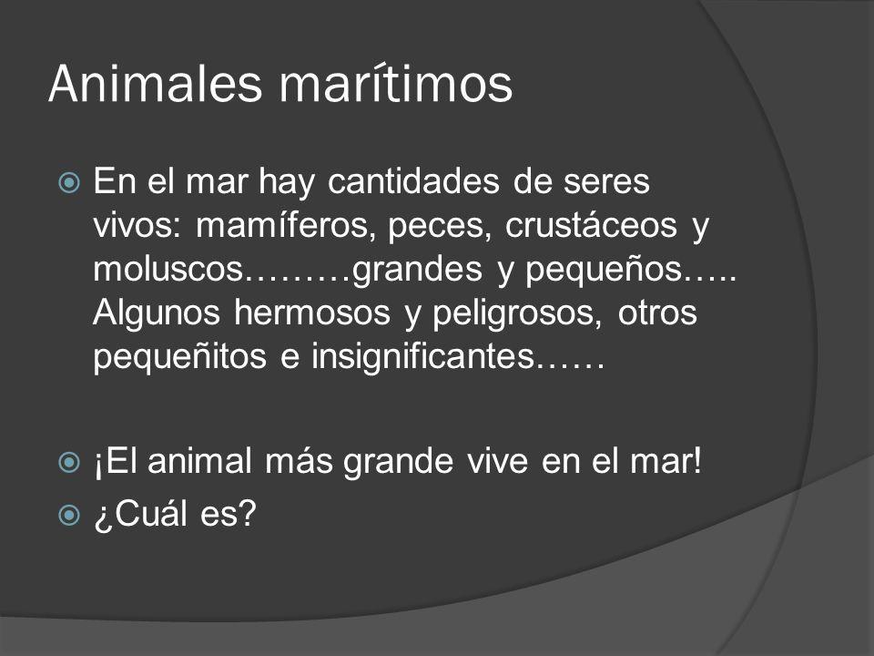 Animales marítimos En el mar hay cantidades de seres vivos: mamíferos, peces, crustáceos y moluscos………grandes y pequeños…..