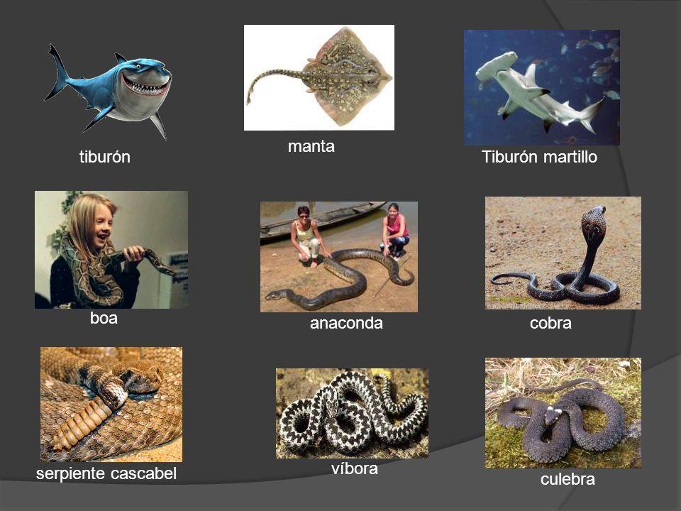 tiburón culebra víbora serpiente cascabel boa anacondacobra Tiburón martillo manta