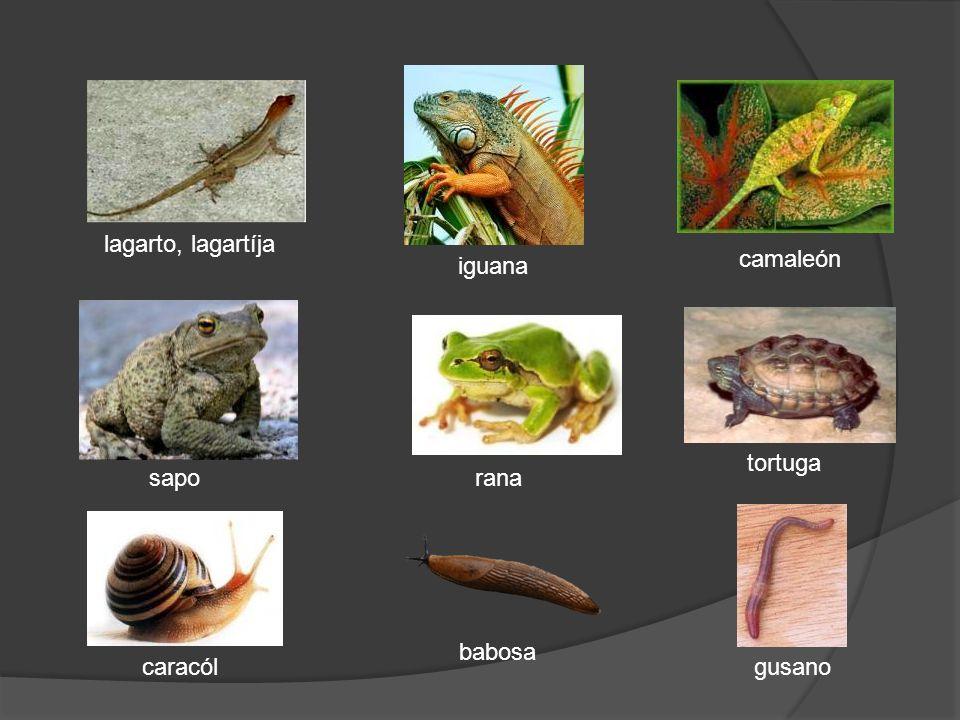 tortuga gusanocaracól babosa ranasapo lagarto, lagartíja iguana camaleón
