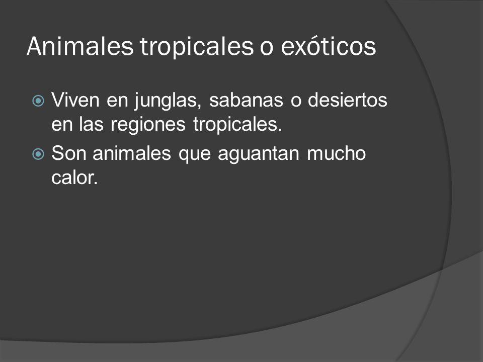 Animales tropicales o exóticos Viven en junglas, sabanas o desiertos en las regiones tropicales.