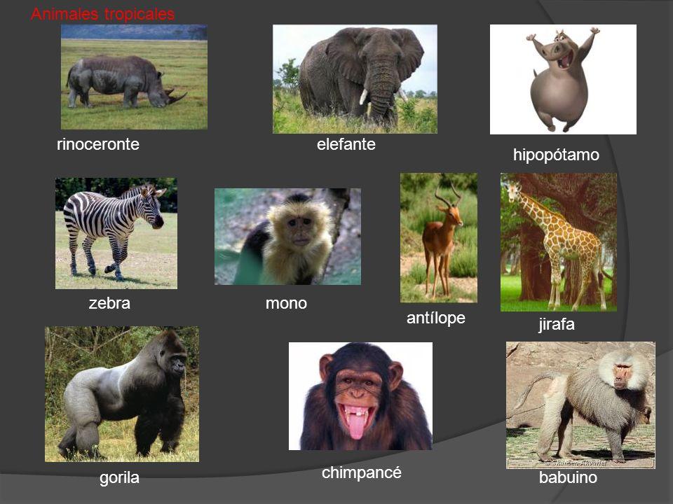 gorila hipopótamo zebra jirafa chimpancé mono rinoceronte babuino antílope Animales tropicales elefante
