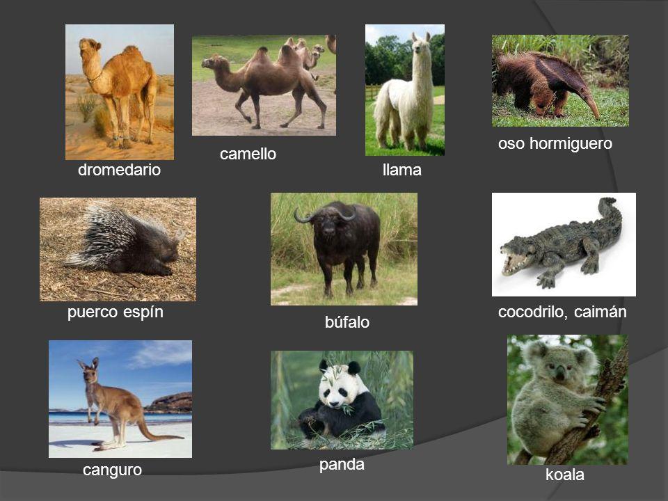 Las fieras Los grandes gatos normalmente viven en zonas calurosas – las junglas y sabanas.