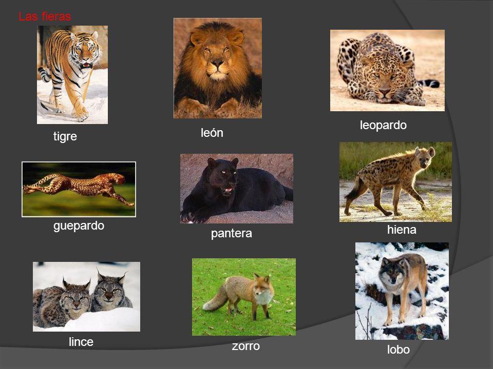 tigre pantera león Las fieras lobo zorro lince hiena guepardo leopardo