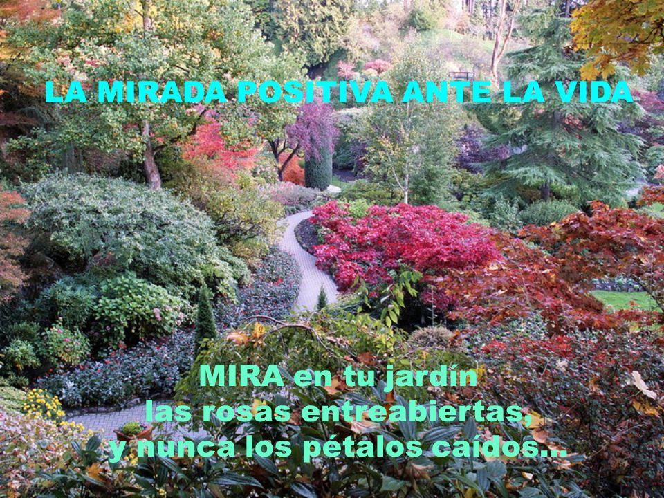LA MIRADA POSITIVA ANTE LA VIDA MIRA en tu jardín las rosas entreabiertas, y nunca los pétalos caídos...