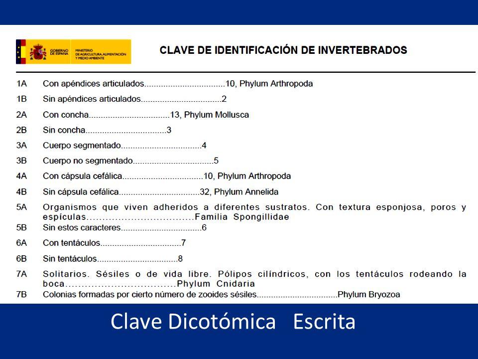 Clave Dicotómica Escrita