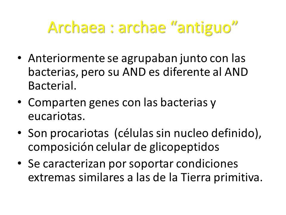 Archaea : archae antiguo Anteriormente se agrupaban junto con las bacterias, pero su AND es diferente al AND Bacterial. Comparten genes con las bacter