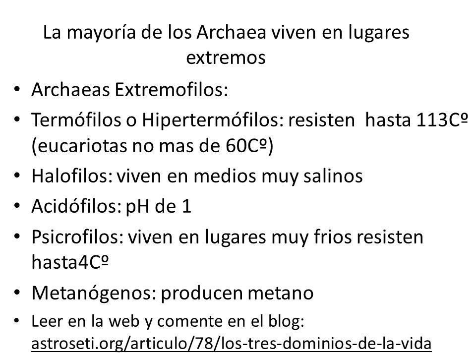 La mayoría de los Archaea viven en lugares extremos Archaeas Extremofilos: Termófilos o Hipertermófilos: resisten hasta 113Cº (eucariotas no mas de 60