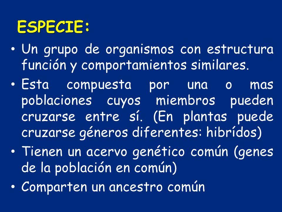 ESPECIE : Un grupo de organismos con estructura función y comportamientos similares. Esta compuesta por una o mas poblaciones cuyos miembros pueden cr