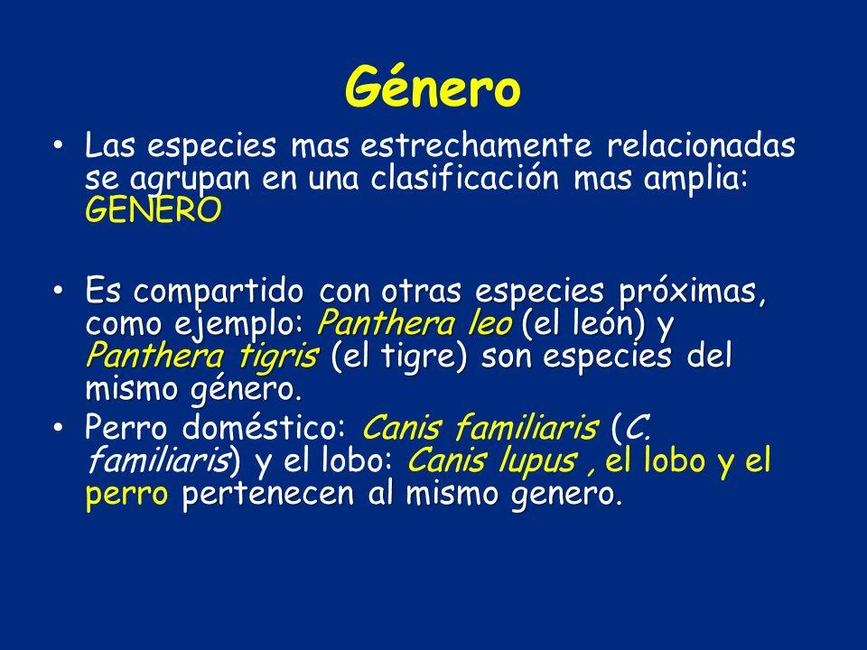 Género Las especies mas estrechamente relacionadas se agrupan en una clasificación mas amplia: GENERO Es compartido con otras especies próximas, como