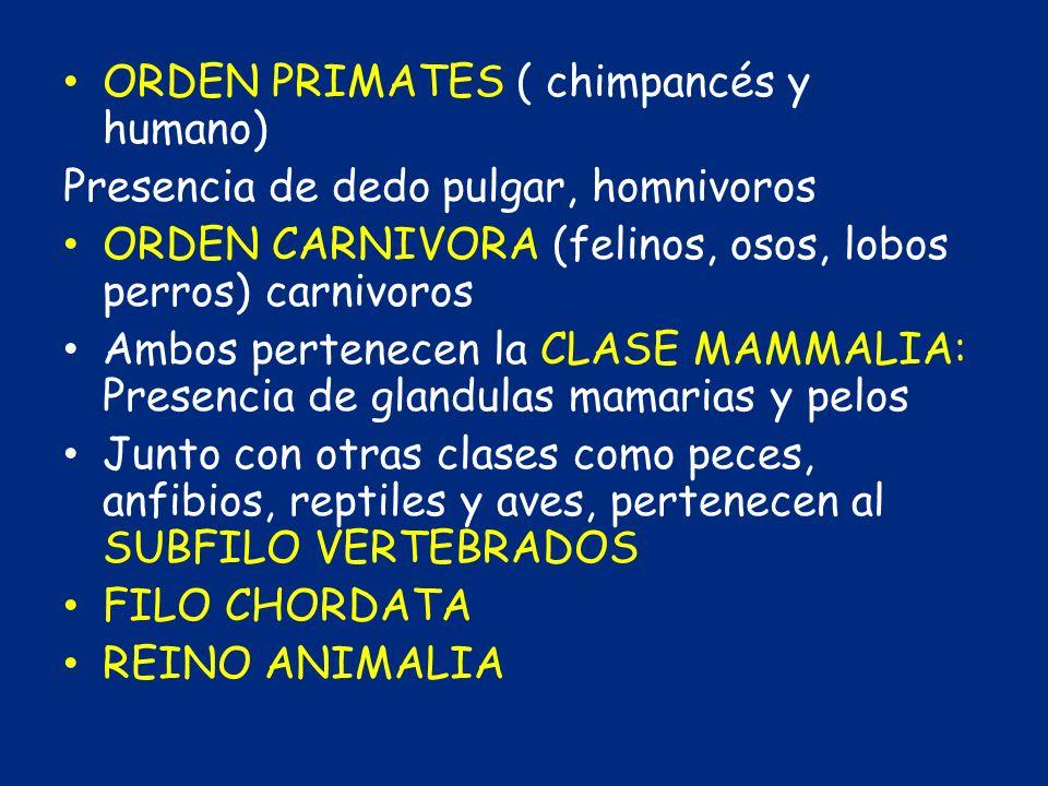 ORDEN PRIMATES ( chimpancés y humano) Presencia de dedo pulgar, homnivoros ORDEN CARNIVORA (felinos, osos, lobos perros) carnivoros Ambos pertenecen l