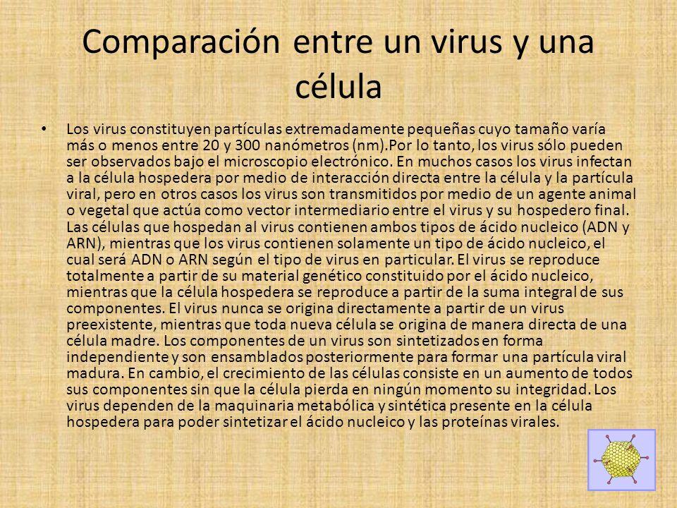 Comparación entre un virus y una célula Los virus constituyen partículas extremadamente pequeñas cuyo tamaño varía más o menos entre 20 y 300 nanómetros (nm).Por lo tanto, los virus sólo pueden ser observados bajo el microscopio electrónico.