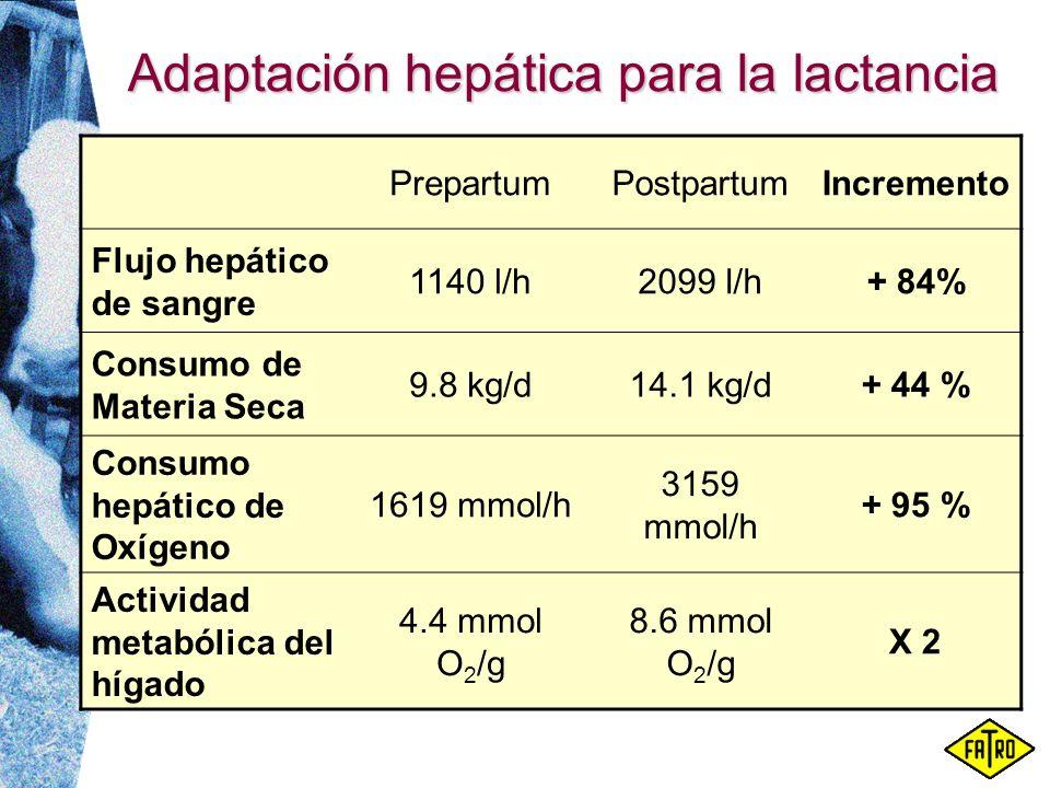 Adaptación hepática para la lactancia PrepartumPostpartumIncremento Flujo hepático de sangre 1140 l/h2099 l/h+ 84% Consumo de Materia Seca 9.8 kg/d14.