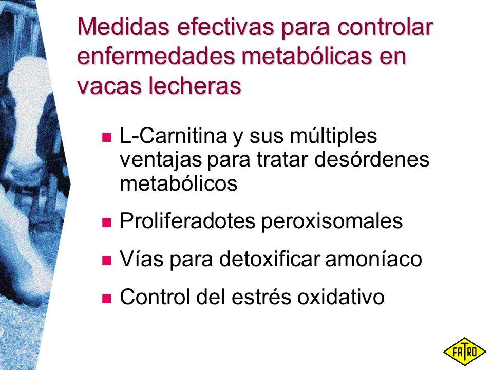 Medidas efectivas para controlar enfermedades metabólicas en vacas lecheras L-Carnitina y sus múltiples ventajas para tratar desórdenes metabólicos Pr