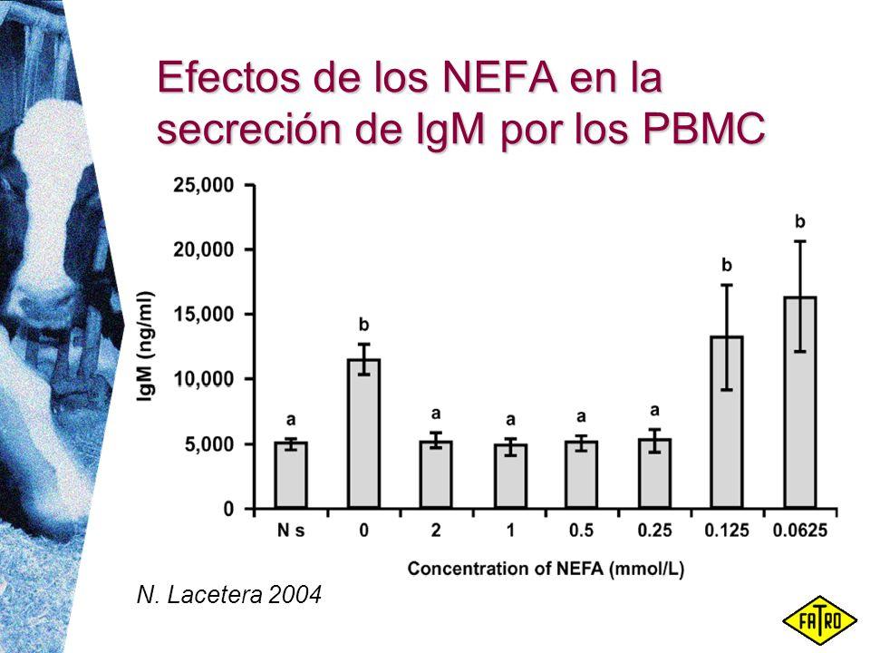Efectos de los NEFA en la secreción de IgM por los PBMC N. Lacetera 2004