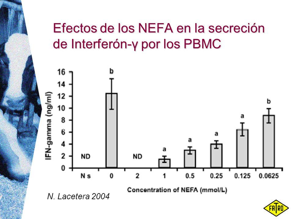 Efectos de los NEFA en la secreción de Interferón-γ por los PBMC N. Lacetera 2004