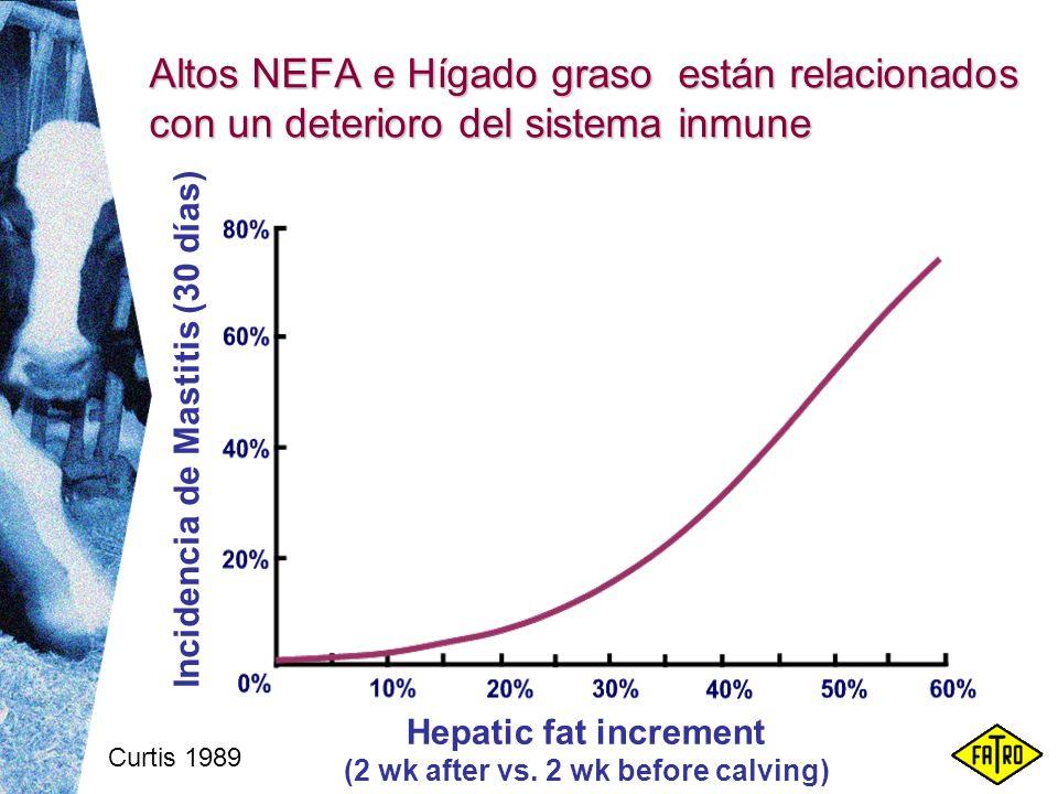 Curtis 1989 Altos NEFA e Hígado graso están relacionados con un deterioro del sistema inmune Incidencia de Mastitis (30 días) Hepatic fat increment (2
