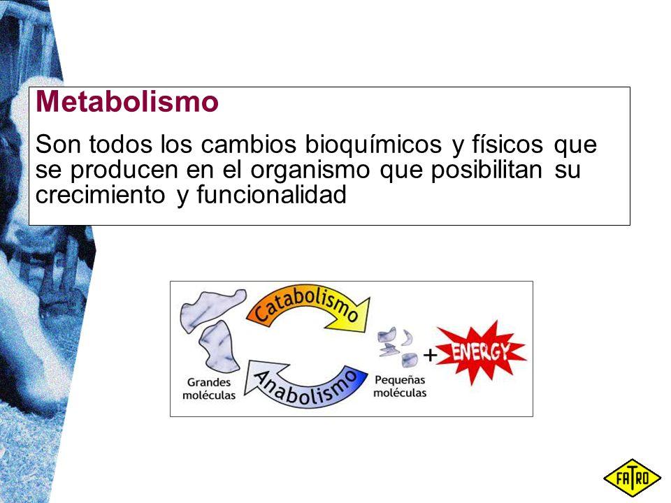 Metabolismo Son todos los cambios bioquímicos y físicos que se producen en el organismo que posibilitan su crecimiento y funcionalidad